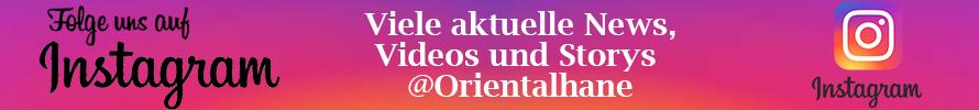Orientalhane auf Instagram folgen!
